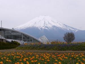 富士山~花の都公園より