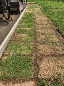 昨年張った芝